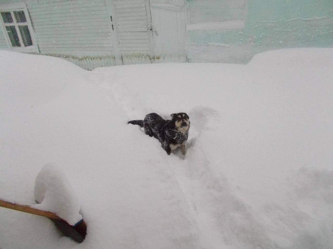 Унесенные снегом: власти Бурятии оставили местных жителей без отопления